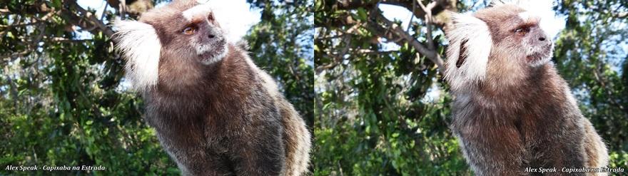 Olha o mico aí